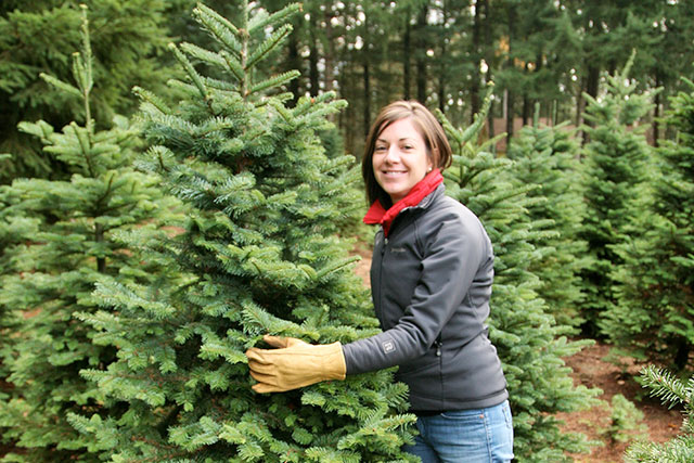 get your christmas trees from cashmans this year - Christmas Tree Nursery