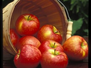 Honeycrisp preview image