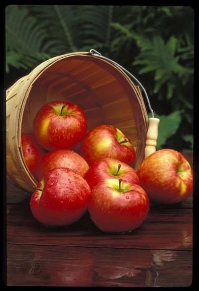 Image of Honeycrisp