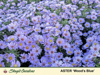 Aster preview image