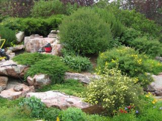 This landscape includes a pond and waterfall, a  raised timber garden for vegetables, fruit trees and numerous flower and shrub beds