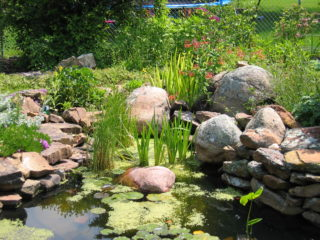 This pond was created in a small backyard in Bozeman.  This beautiful, private space was created by doing just a little bit each year over several years.